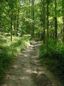 stukje trailen doorheen het Savelsbos