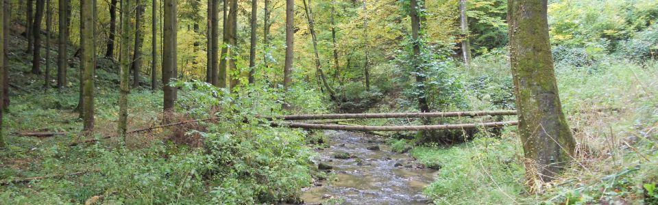 Trailen in Luxemburg
